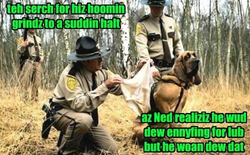 teh serch for hiz hoomin grindz to a suddin halt az Ned realiziz he wud dew ennyfing for lub but he woan dew dat