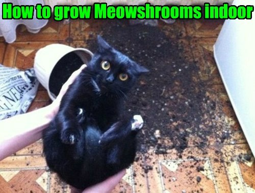 Cats,basement cat,DIY,Mushrooms