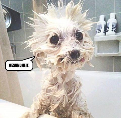 dogs gesundheit sneeze - 8432460288