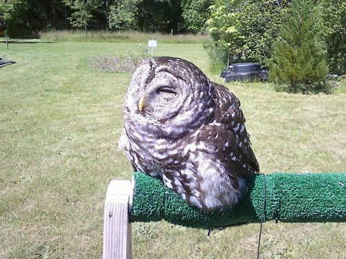 Owl,melting,sunlight