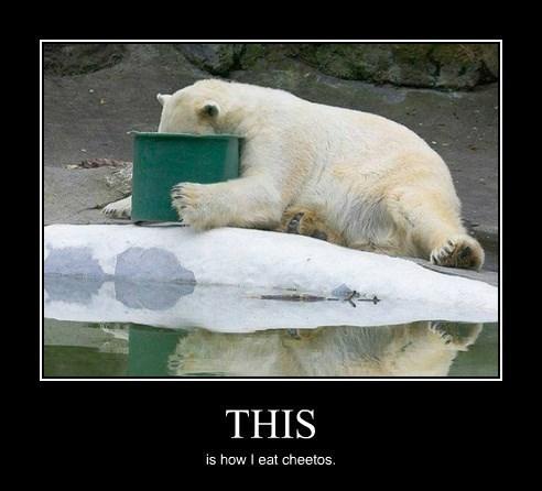 polar bears cheetos funny - 8432648960