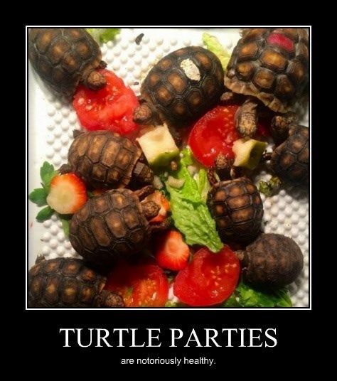 boring Party turtle funny - 8432651264