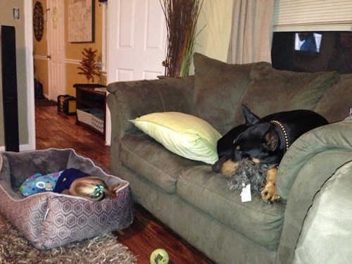 dogs,kids,couch,dog bed,parenting,sleeping