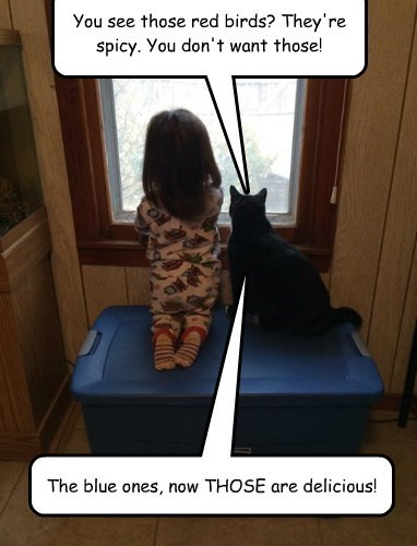 minion kids advice noms Cats - 8432693760
