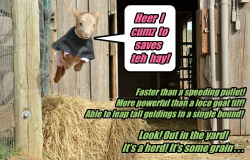 Heer I cumz to saves teh hay! Faster than a speeding pullet! More powerful than a loco goat tiff! Able to leap tall geldings in a single bound! Look! Out in the yard! It's a herd! It's some grain . . .