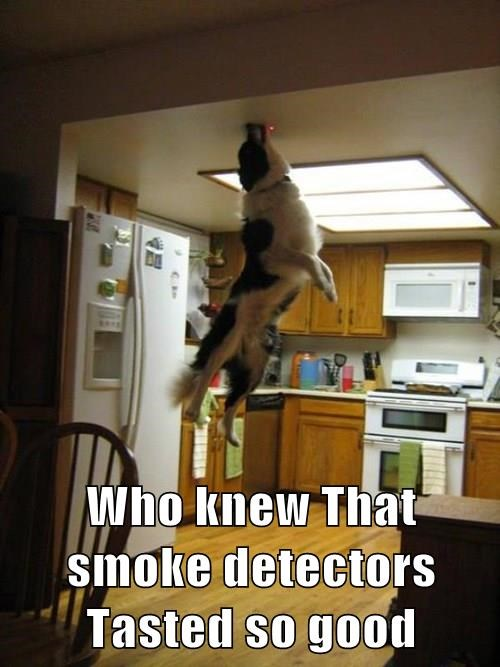 Who Knew That Smoke Detectors Tasted So Good I Has A Hotdog