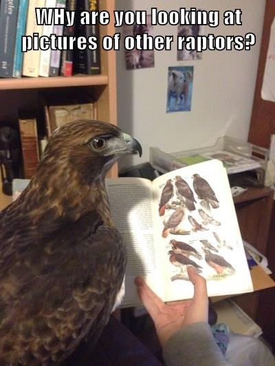 caught,hawk,Raptor,cheating
