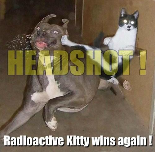 dogs headshot level up Cats - 8433207808
