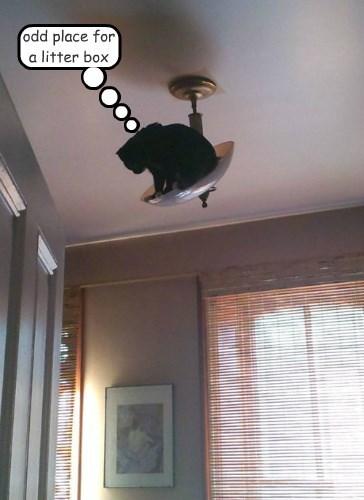 litter box Cats weird - 8433306368