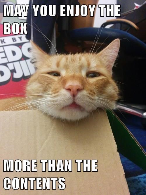 animals tabby box if i fits i sits Cats - 8433314048