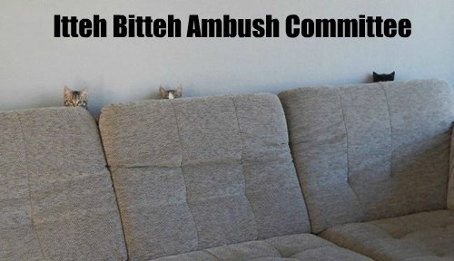 tiny ambush Cats - 8433314560