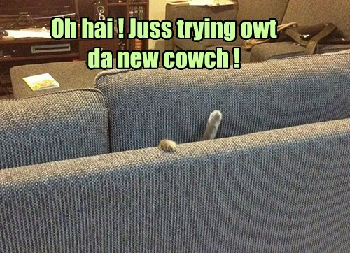 stuck couch confused Cats - 8433316608