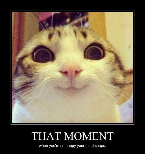 happy Cats funny - 8433429760