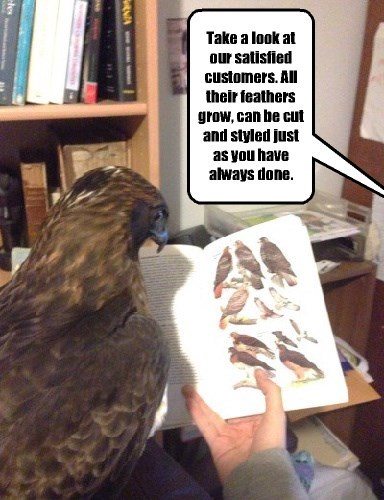 hair eagle bald - 8433487616