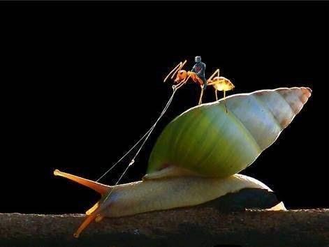 ant man - 8433638656