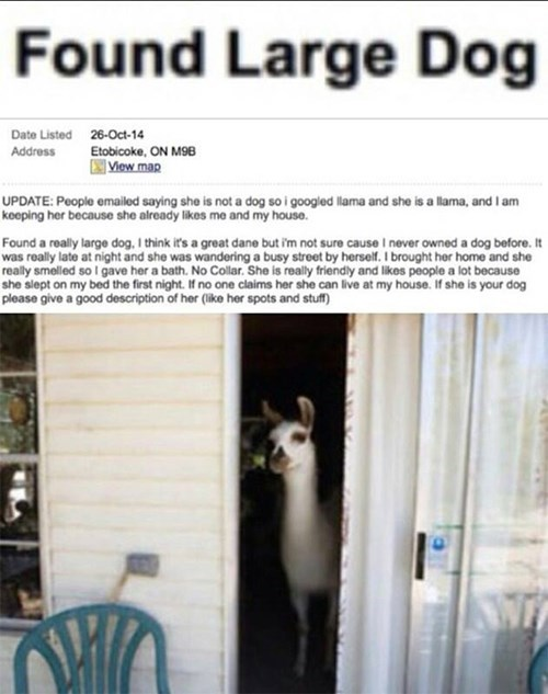 craigslist,llama,pets,lost and found,trolling,g rated,win