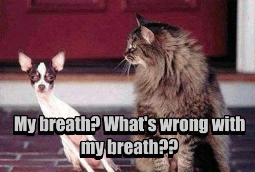 dogs breath cat wrong caption - 8433766144