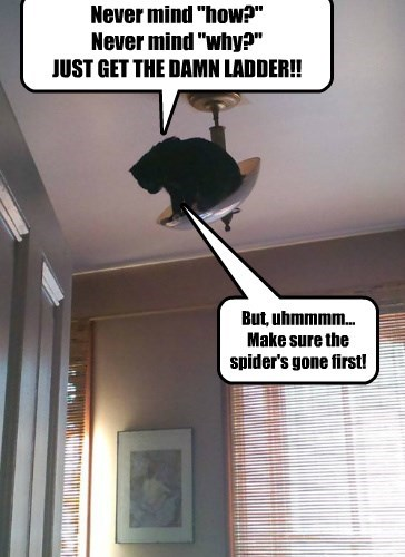 gone cat ladder spider caption - 8433796096