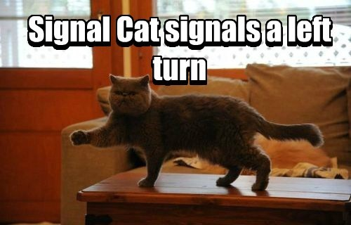left signal cats are weird Cats - 8434199296
