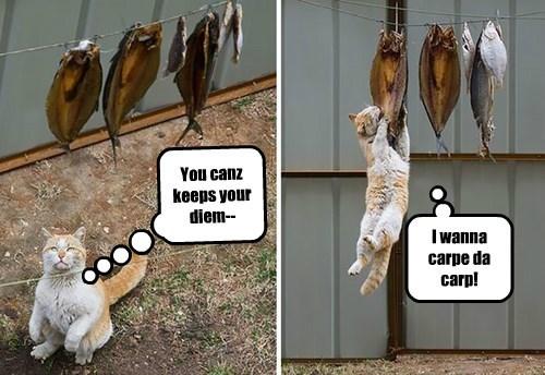 cat carpe diem caption fish carp - 8434230528