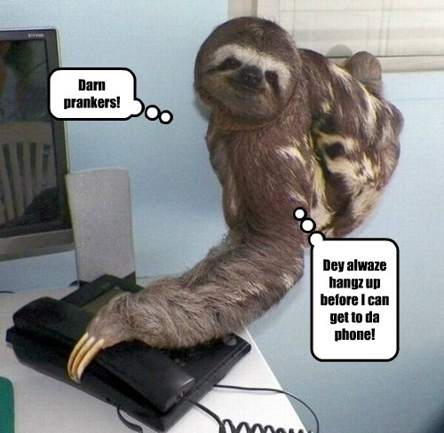 phone slow prank sloth