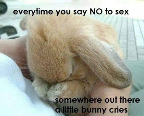 every time you say no to sex a bunny cries