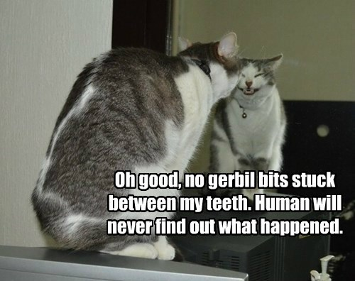 Oh good, no gerbil bits stuck between my teeth. Human will never find out what happened.