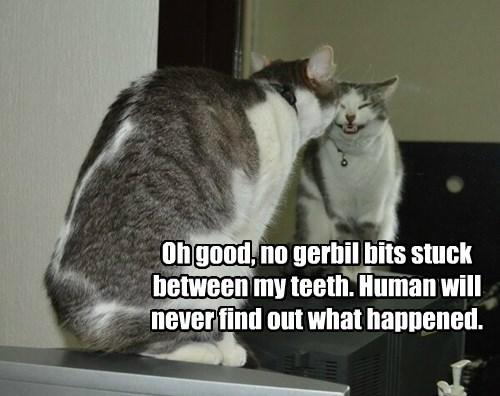 bits cat gerbil teeth captions - 8434456832