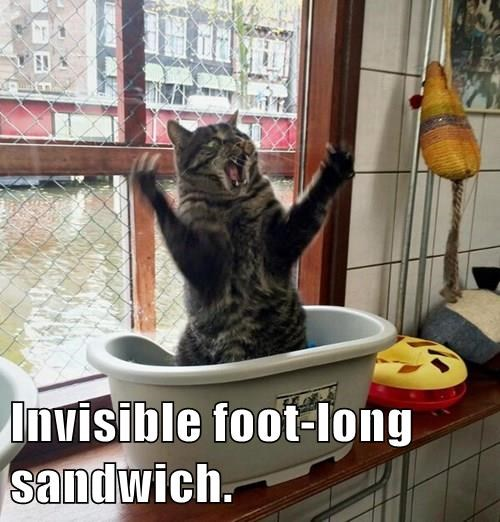 animals cat footlong sandwich invisible captions - 8434645248