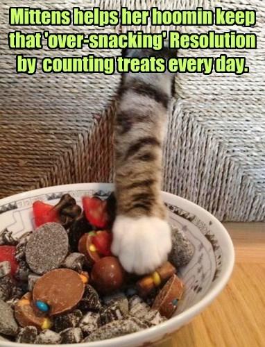 captions Cats funny - 8435085056