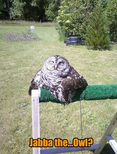 Jabba the Hut,star wars,totally looks like,Owl