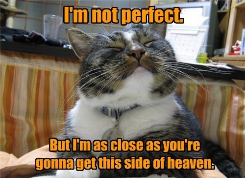 cat heaven perfect close not caption - 8435339264
