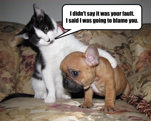 dogs blame cat fault caption - 8435341056