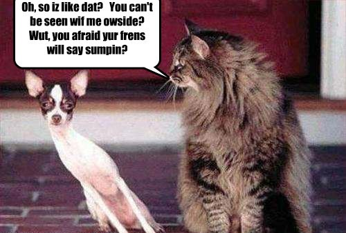cat dogs something say friends afraid caption - 8435353088