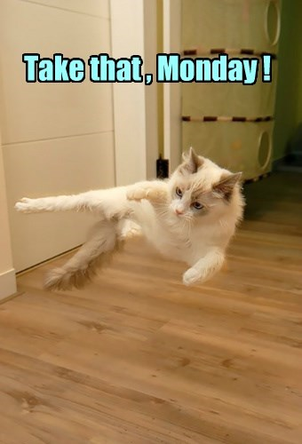 take that,attack,hiya,Cats,monday
