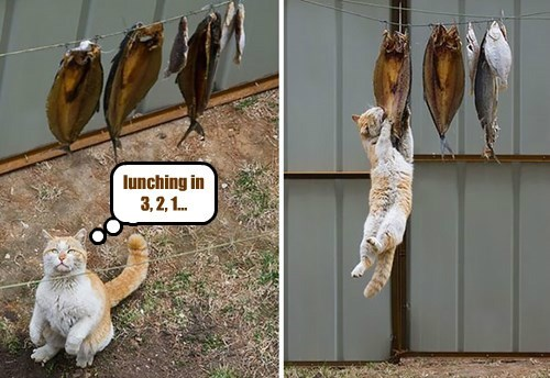 fish Cats funny captions - 8435517440