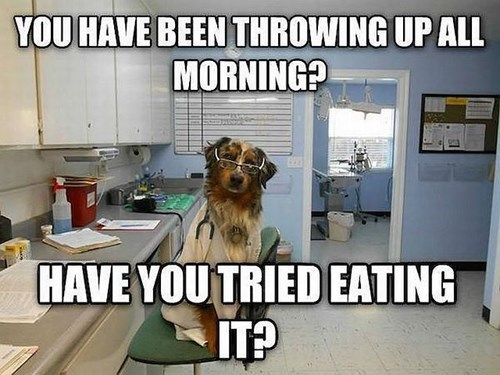 vomit dogs doctor i have no idea what im doing - 8435596544