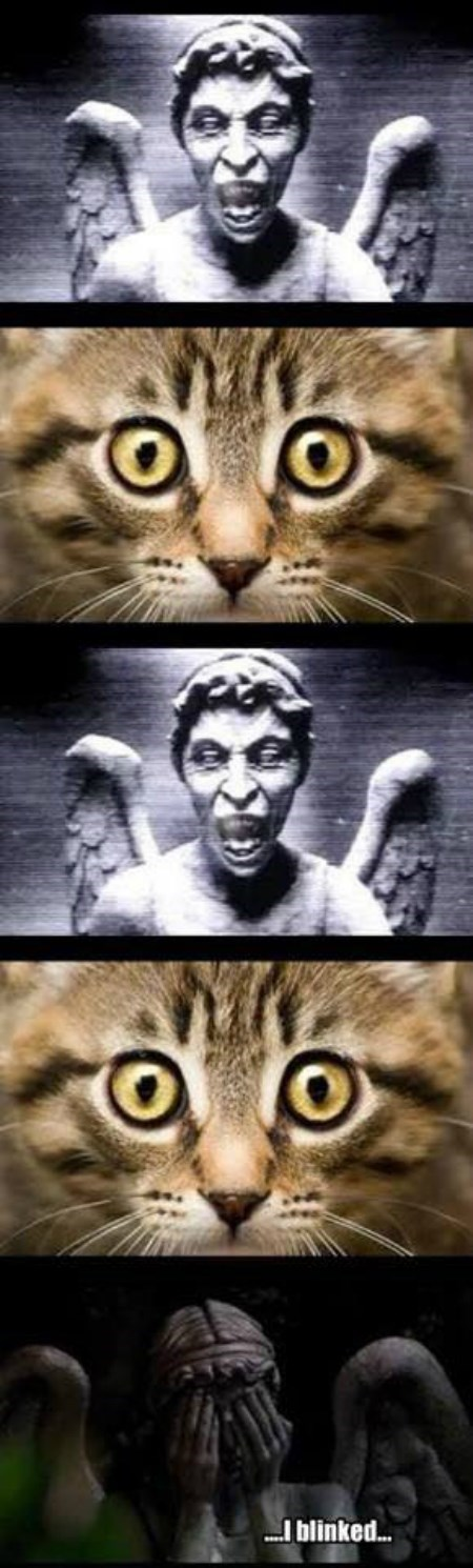 weeping angels Cats dont-blink - 8435604480