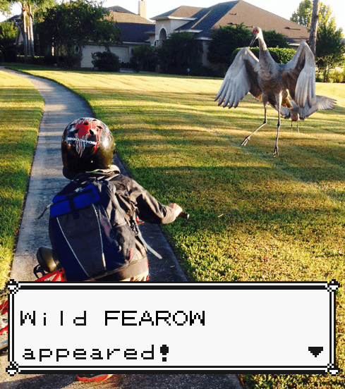 IRL Pokémon Fearow Pokeballs - 8435663104