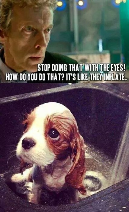 big eyes,puppy,12th Doctor,squee