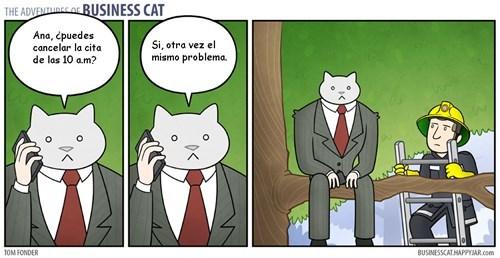 gato jefe