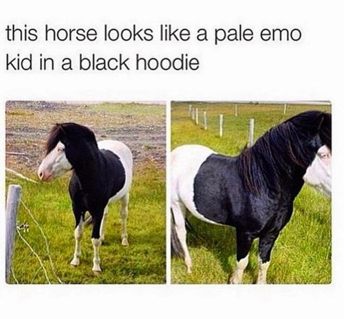 twitter emo hoodie horse failbook g rated - 8436152832