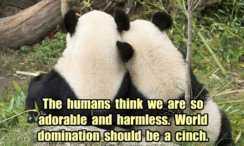 The humans think we are so adorable and harmless. World domination should be a cinch.