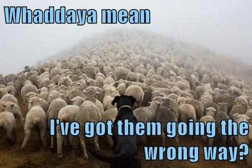 dogs,sheep,work sucks,monday