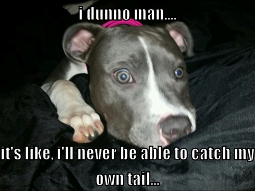 dogs tail insomnia pit bull - 8436235520