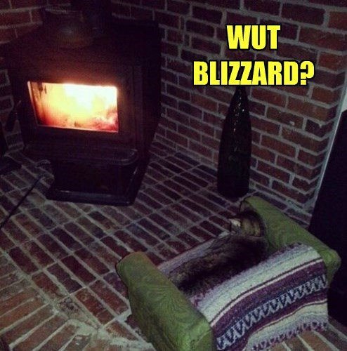 blizzard cozy fire Cats - 8436357120