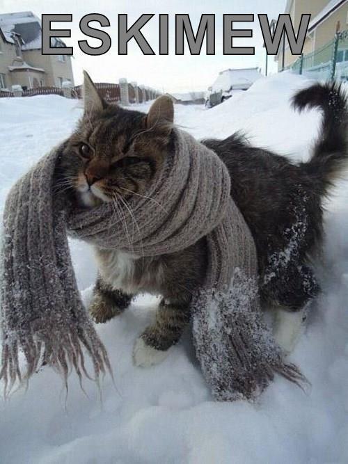 animals captions puns cute Cats - 8436372736