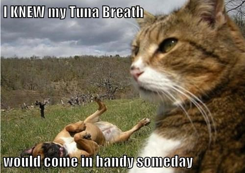 I KNEW my Tuna Breath would come in handy someday