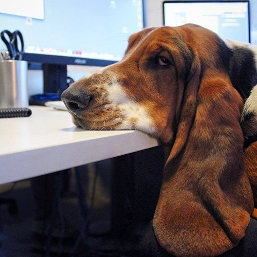 monday thru friday dogs desk tired - 8436425472