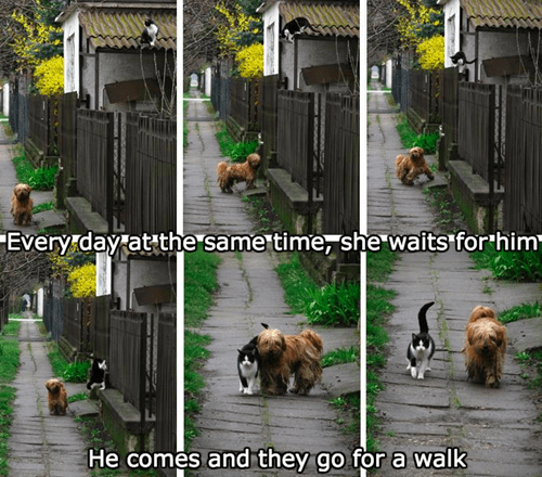 dogs friends every day walking Cats - 8436504064